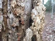 Close up of tree bark Stock Photography