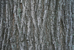 Close up of tree bark details - background or texture Stock Photos