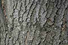 Close up of tree bark details - background or texture. Tree bark in small details in sun light Stock Image