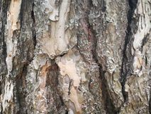 Close up of tree bark Stock Photography
