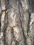 Close up of tree bark Stock Image