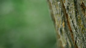Close-up of tree bark in forest. Close-up of tree bark in green forest stock video