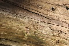 Close up Tree Bark with moss and wood worm holes Royalty Free Stock Photo