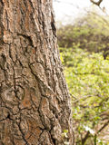 Close up of Tree Bark With Quality Texture and Detail and blurre Stock Photo