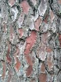 Close up tree bark shell in Orleans France stock images