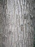 Close up of tree bark Stock Photos