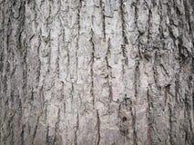 Close up of tree bark Stock Photo
