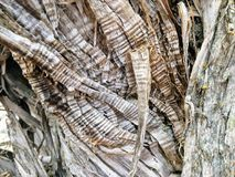 Close up tree bark texture of background in Oquirrh Mountains on the Wasatch Front in Salt Lake County Utah USA. Royalty Free Stock Images