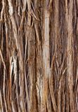 Close up of tree bark royalty free stock images