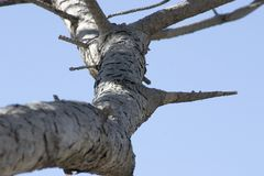 Close up on a Tree Branch. In Spring Stock Photo