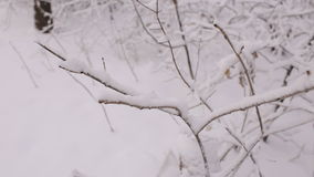 Close-up of tree branch covered with snow. Winter landscape. Snow-covered forest stock video footage