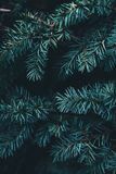 Close-up of Tree Branches Stock Photos