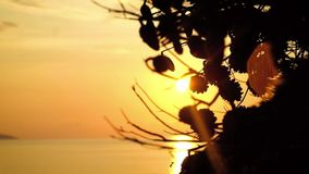 Close-up tree branches against the sunset stock footage