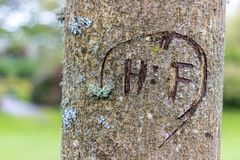 Close-up of a tree carving. Aberdeen, Scotland royalty free stock photography