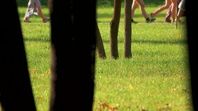Close up tree in crowded city park. Green lawn. Walking people stock video footage