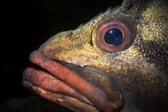 Close up of a Tree fish face in California stock photo