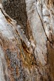 Tree Bark Close Up, Texture And Shape stock photos