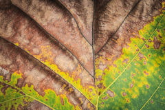 Close up tree leave tuxture for background Royalty Free Stock Images