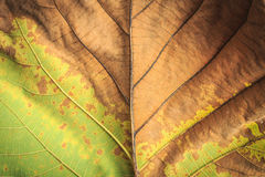 Close up tree leave tuxture for background Royalty Free Stock Image
