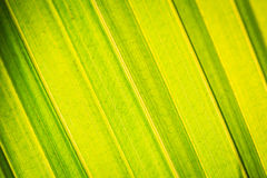 Close up tree leave tuxture Stock Images