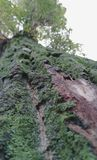 Close-up of Tree with moss on it royalty free stock photography
