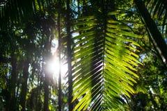 Tropical rainforest in Australia stock photos