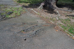 Close up on tree roots destroying a asphalt Stock Photos