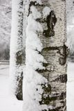 Close up of the tree with snow Royalty Free Stock Image