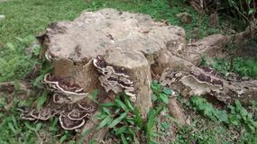 Close up of tree stump Royalty Free Stock Photo