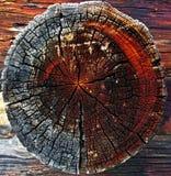 Close-up of Tree Stump Royalty Free Stock Image