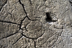 Close-up of a tree stump core. Brown grainy cracked photo of a tree stump core Royalty Free Stock Images