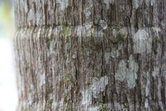 Close up on tree stump with green moss stock image