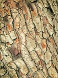 Close Up Of Bark On A Tree Royalty Free Stock Images