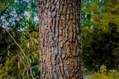 Tree Texture stock photos