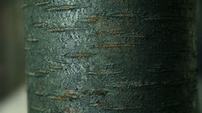 Close up of a tree trunk stock footage