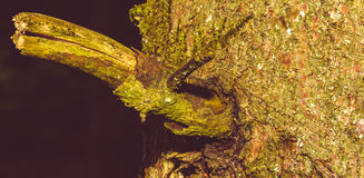 Close up of Tree Trunk Branch B Stock Photography