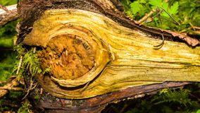 Close up of Tree Trunk Branch C Stock Photo