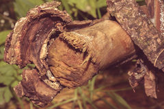 Close up of Tree Trunk Branch D Royalty Free Stock Images