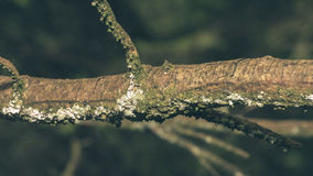 Close up of Tree Trunk Branch F Stock Images