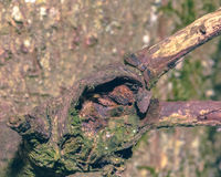 Close up of Tree Trunk Branch A Stock Images
