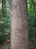 Close up of tree trunk Royalty Free Stock Photo