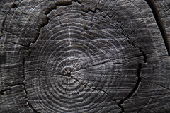 Close up of tree trunk rings Stock Photography
