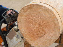 Close up of a tree trunk which is getting sliced Royalty Free Stock Photo