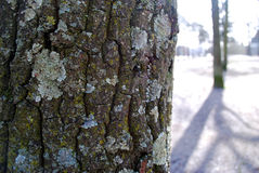 Close up of the tree. In winter with sun flecks stock photo