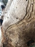 Close Up, Tree, Wood, Rock royalty free stock photo