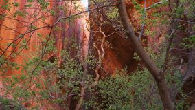 Close up of trees and rocks inside mountain in Zion National Park Utah royalty free stock image