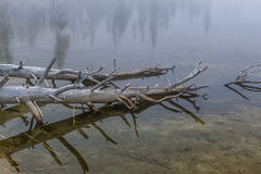 Close up of trees in water. Royalty Free Stock Photography
