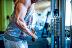 Close-up of triceps of an athletic, muscular man. Close-up of triceps of an athletic, muscular and attractive man working out at gym royalty free stock photography