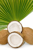 Close-up of tropical coconuts Stock Photo
