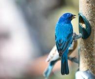 Close-up tropical do pássaro fotografia de stock royalty free